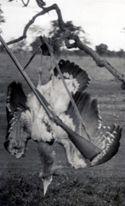 Fra Arero e Malca: otarda reale: dic. 1936